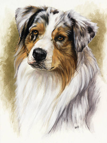 Wall Art - Mixed Media - Australian Shepherd by Barbara Keith