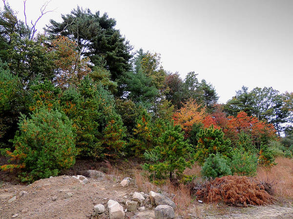 Photograph - Autumn Colors In Rhode Island by Andrew Chambers