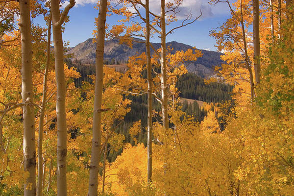 Wall Art - Photograph - Autumn Colors In The Wasatch Mountains by Douglas Pulsipher