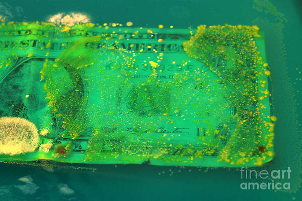 Wall Art - Photograph - Bacteria Growing On Dollar Bill by Scimat