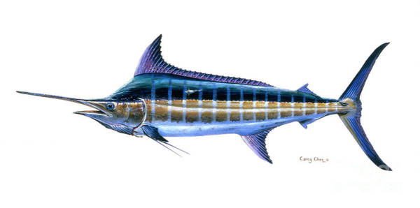 Mako Painting - Blue Marlin by Carey Chen