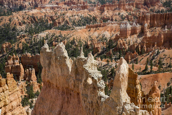 Photograph - Bryce Canyon National Park by Jim West