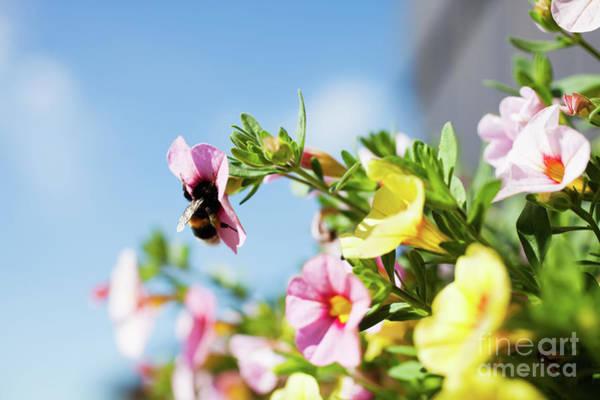 Wall Art - Photograph - Bumblebee by Kati Finell