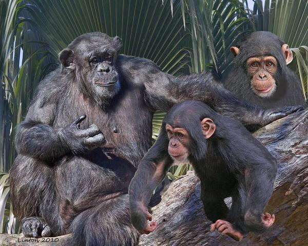 Photograph - Chimpanzee Montage by Larry Linton