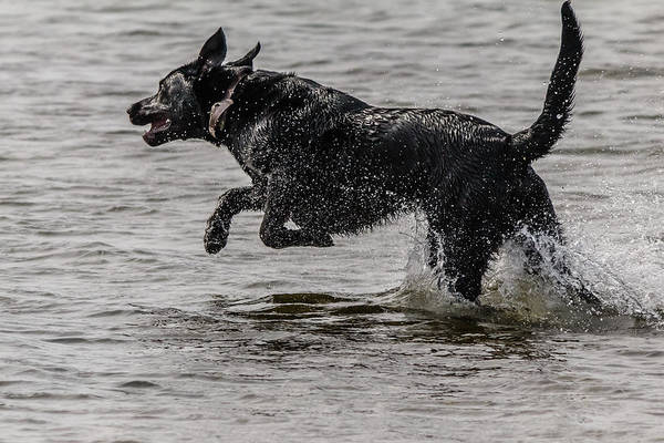 Wall Art - Photograph - Dog Playing In Water by SAURAVphoto