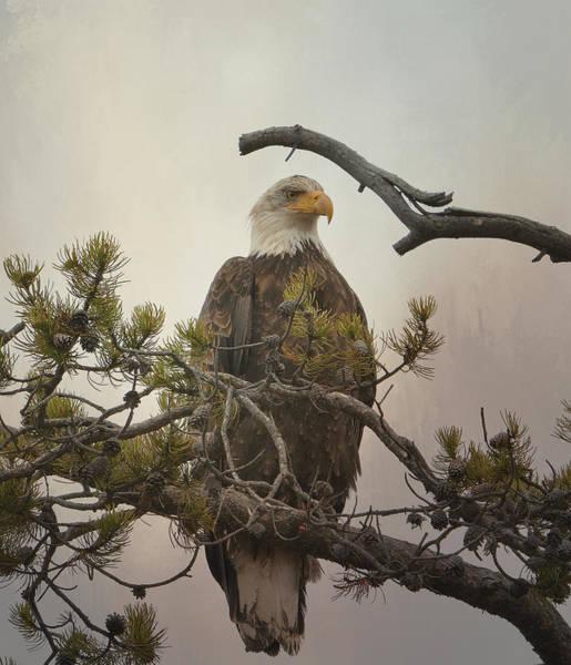 Photograph - Eagle Eye by Fraida Gutovich
