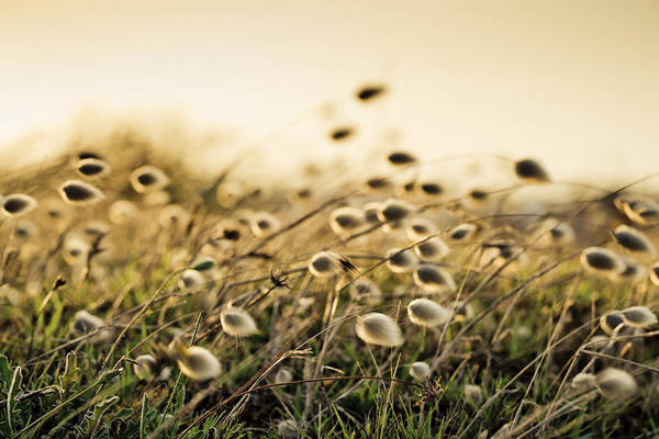 Grass Photograph - Evening by Nailia Schwarz