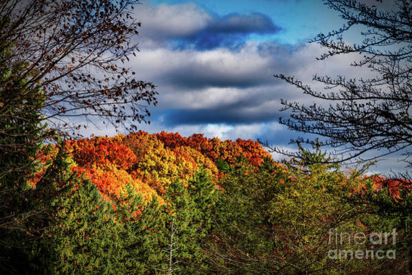 Photograph - Fall Foliage by William Norton