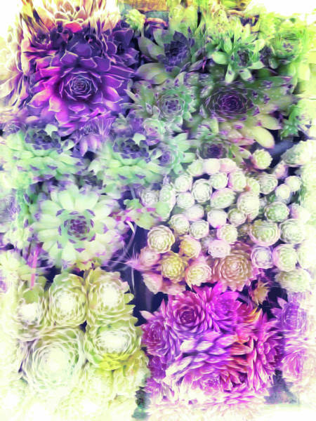 Purple Haze Photograph - Floral Digital Pattern by Tom Gowanlock