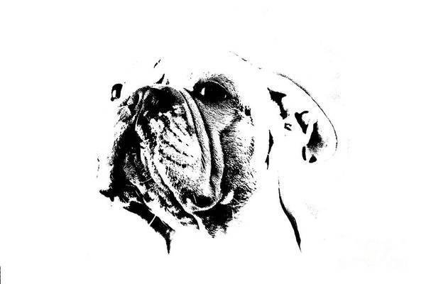 Wall Art - Mixed Media - French Bulldog by Jana Behr