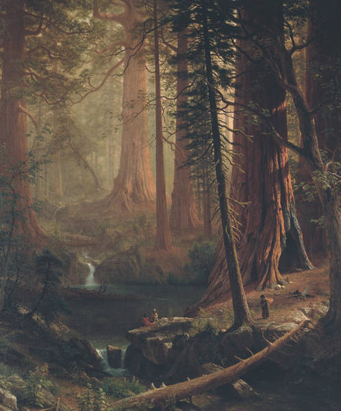 Giant Painting - Giant Redwood Trees Of California by Albert Bierstadt