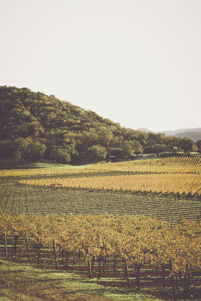 Photograph - Grapevines In The Fall by Brandon Bourdages