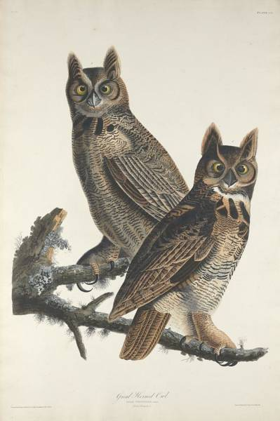 Wall Art - Drawing - Great Horned Owl by Dreyer Wildlife Print Collections