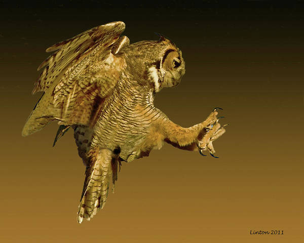 Photograph - Great Horned Owl by Larry Linton