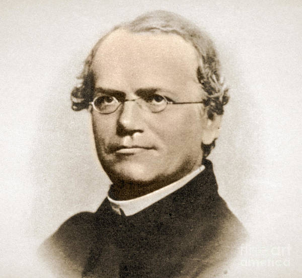 Notable Photograph - Gregor Mendel, Father Of Genetics by Science Source