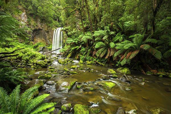 Photograph - Hopetoun Falls by Max Neivandt