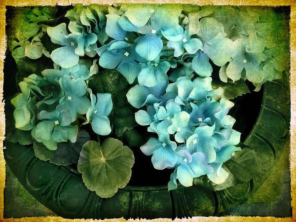 Hydrangea Photograph - Hydrangea by Jessica Jenney