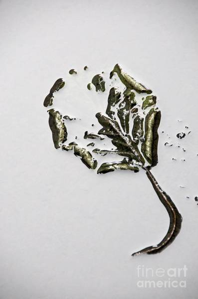 Vegetal Photograph - Leaf by Bernard Jaubert