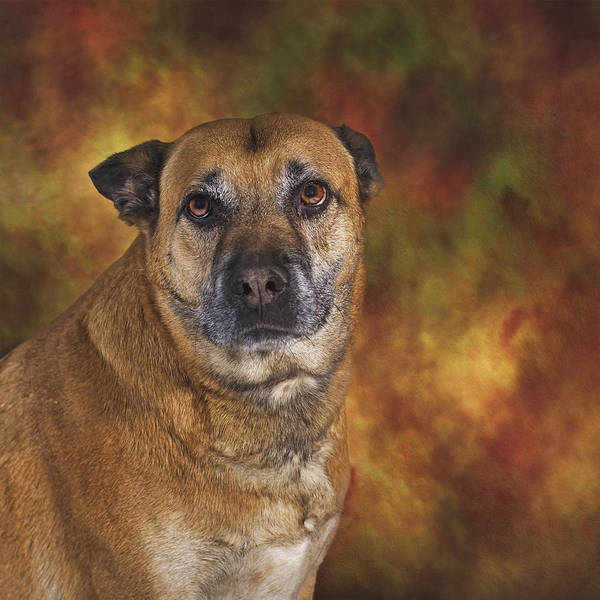Photograph - Mabel  by Brian Cross
