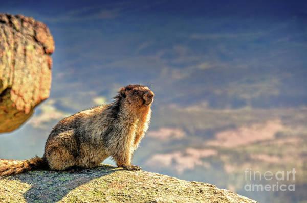 Canada Wall Art - Photograph - Marmot 1 by Viktor Birkus