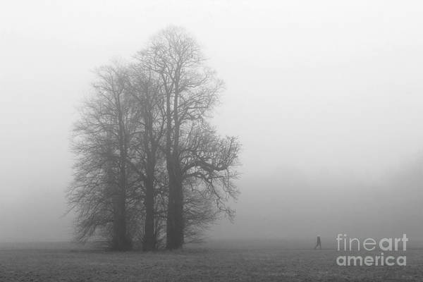Photograph - Misty Morning At Nonsuch Park Surrey by Julia Gavin