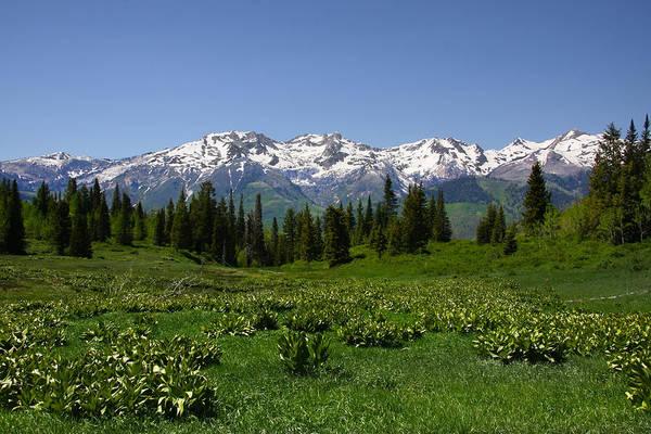 Photograph - Mountain Spring by Mark Smith