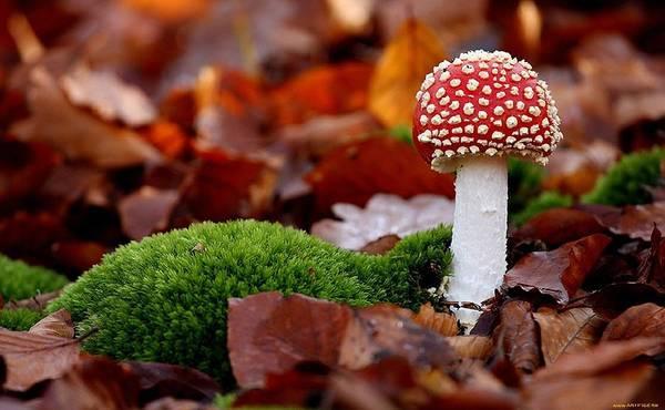 Food And Beverage Digital Art - Mushroom by Maye Loeser