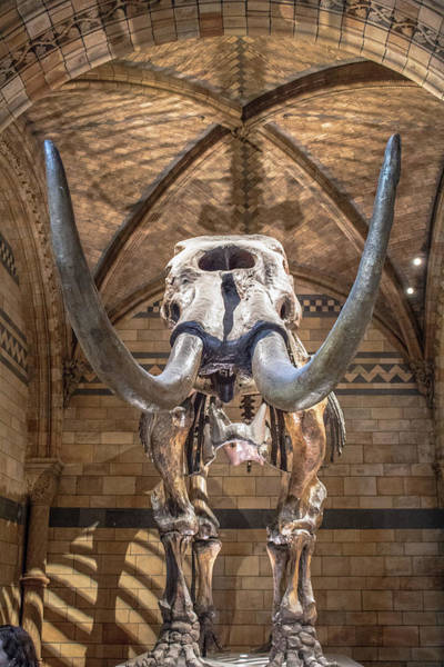 Wall Art - Photograph - Natural History Museum London by Martin Newman
