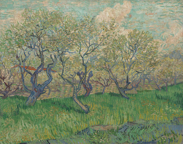 Almond Painting - Orchard In Blossom by Vincent van Gogh