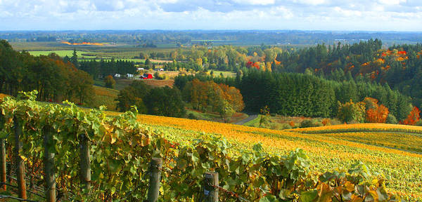 Willamette Photograph - Oregon Wine Country by Margaret Hood