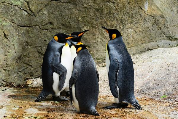 Wall Art - Photograph - Penguins by FL collection