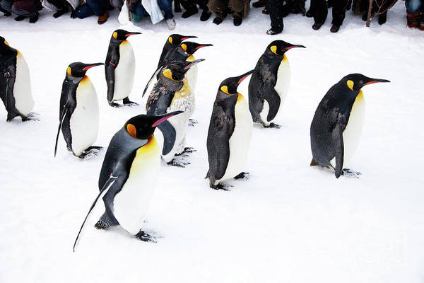 Wall Art - Photograph - Penguins by Kati Finell