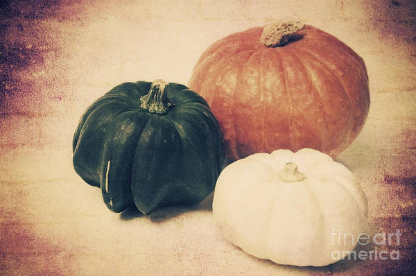 Photograph - Three Pumpkins by Angela Doelling AD DESIGN Photo and PhotoArt