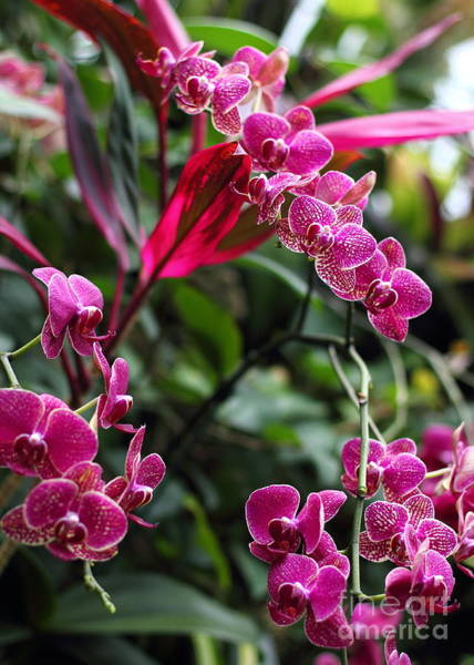Photograph - Purple Orchids by Angela Rath