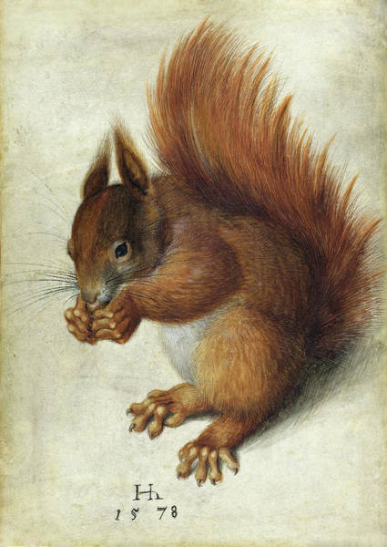 Painting - Red Squirrel by Hans Hoffmann