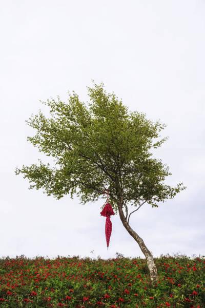 Three Trees Photograph - Red Umbrella by Joana Kruse