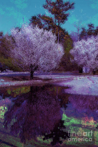 Photograph - Reflections by Donna Bentley