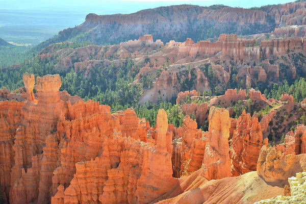 Photograph - Rim Trail Inspiration by Ray Mathis