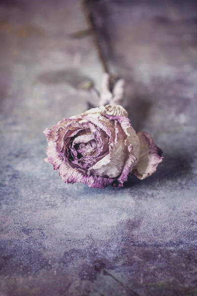 Whimsical Photograph - Rose by Maria Heyens