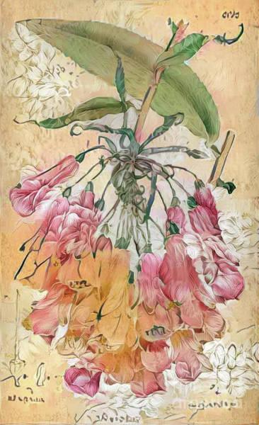 Wall Art - Digital Art - Shabby Chic Botanical Flowers by Amy Cicconi