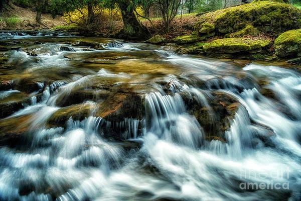 Photograph - Spring Along Anthony Creek by Thomas R Fletcher