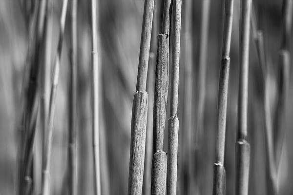 Photograph - 3 Stalks by Brian Pflanz