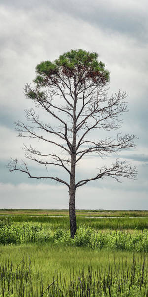 National Wildlife Refuge Wall Art - Photograph - Standing Alone by Robert Fawcett