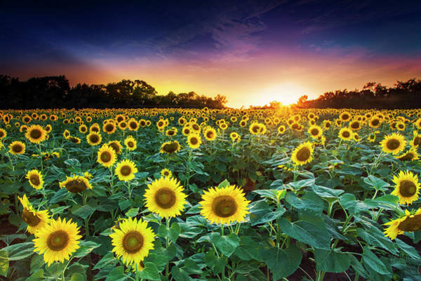 Photograph - 3 Suns by Edward Kreis
