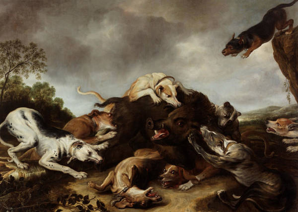 17th Century Wall Art - Painting - The Boar Hunt by Frans Snyders
