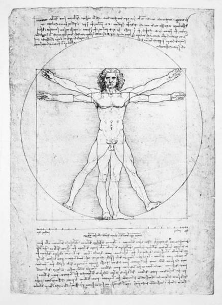 Mathematics Drawing - The Proportions Of The Human Figure by Leonardo Da Vinci