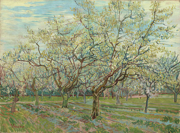 Almond Painting - The White Orchard by Vincent van Gogh