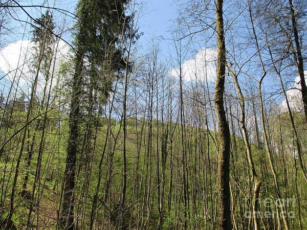 Photograph - Trees In Luxembourg by Chani Demuijlder