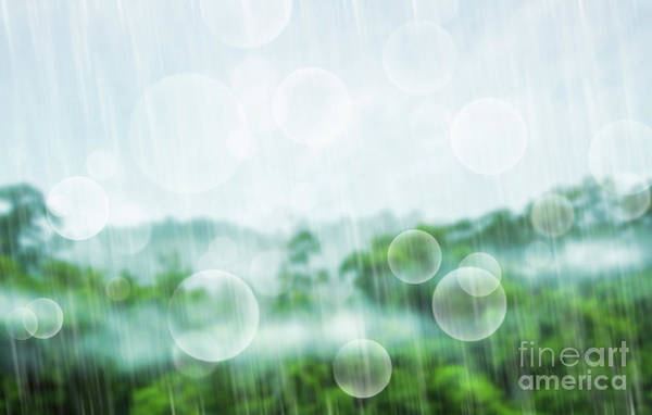 Softly Photograph - Tropical Forest by Atiketta Sangasaeng