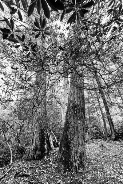 Photograph - Upper Shavers Fork Preserve by Thomas R Fletcher